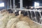 Our livestock: the today cowshed